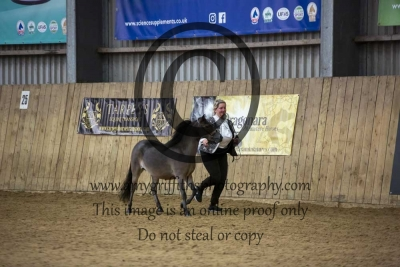 Class 15 – Refined Midi Horse 2 & 3 year old
