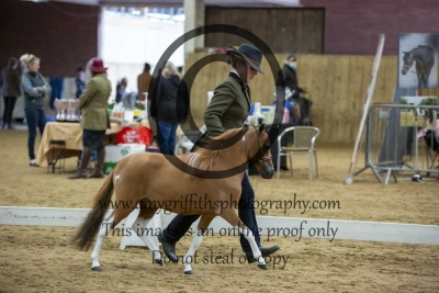 Class 18 – Refined Mini Horse 2 & 3 year old