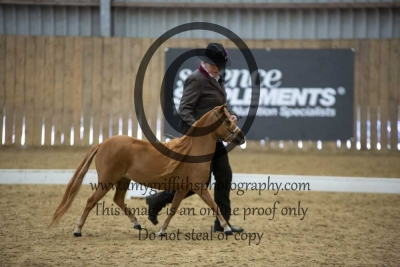 Class 19 – Refined Miniature Horse 4 years +
