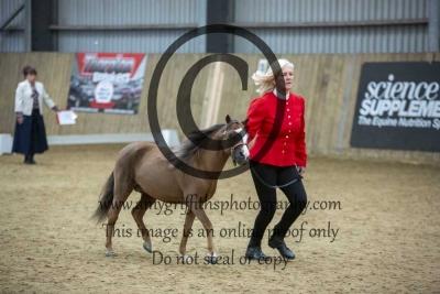 Class 12 – Amateur Stallion or Colt