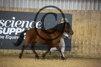 Class 130 – Kerry Bog Pony 4 years and over