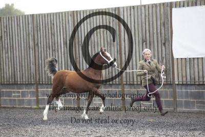 Class 10 – Colt Foal