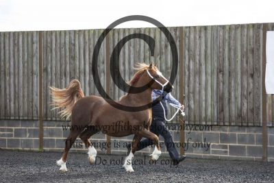 Class 12 – Yearling Colt