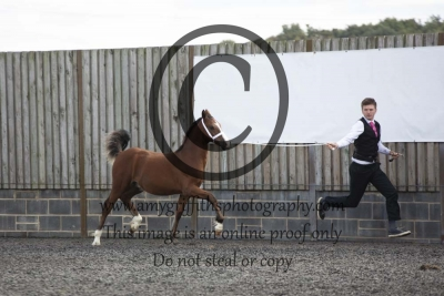 Class 19 – Colt Foal