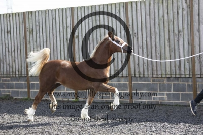 Class 22 – Yearling Filly