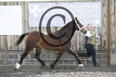 Class 24 – 2 year old Filly
