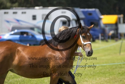 Class 47- D 2 Year Old Filly