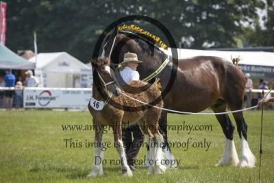 Classes8/9/10: Broodmare & Foals