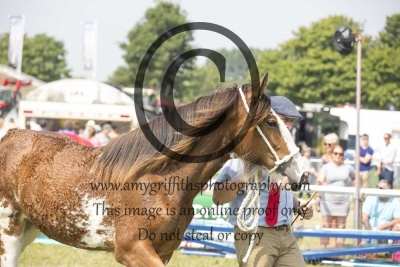 Class 10- Heavy Horse Yearling