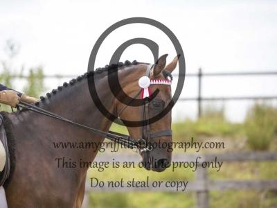 Class 55- Show Pony, Riding Horse, Hack