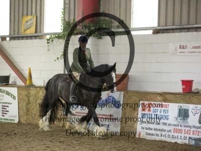 Class 31- Ridden Gelding/ Stallion